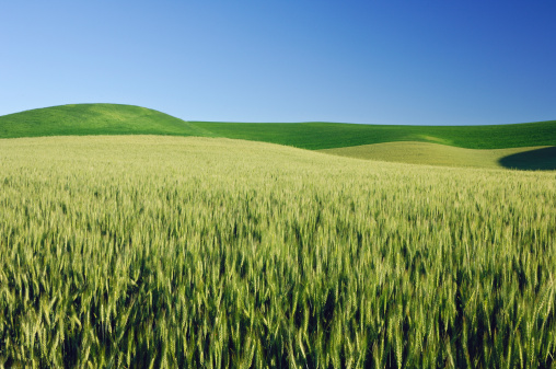 bio-fuel-investment-brazil-green-energy-crops