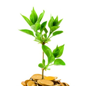 Millettia tree biofuel investment ethical investments green energy