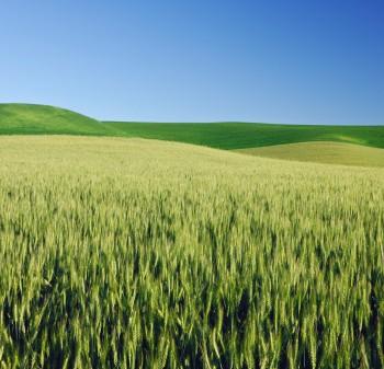 bio fuel energy crops in brazil