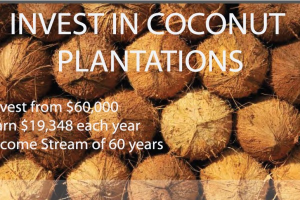coconut investment plantations in brazil
