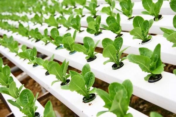 hydroponics investment