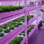 urban farms hydroponic investment