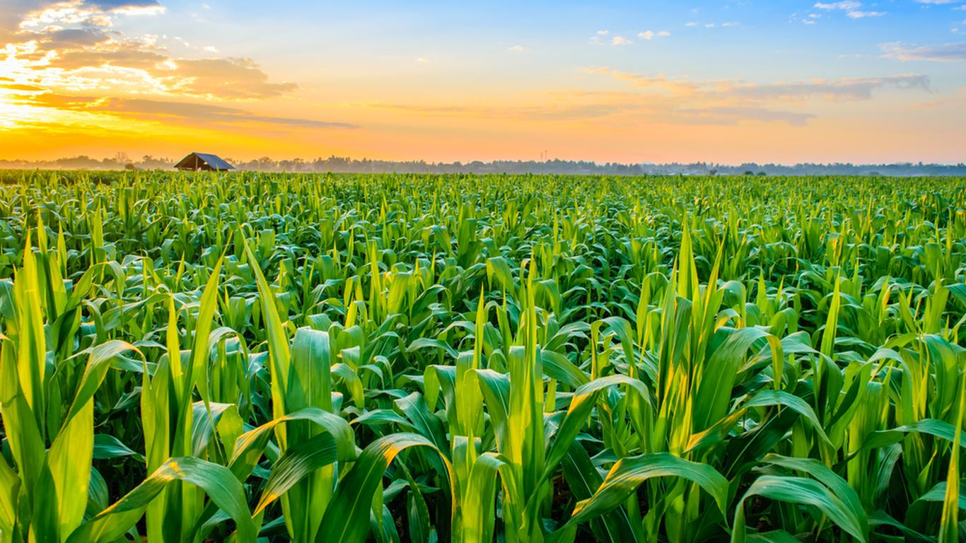 Will An Agricultural Investment Be Profitable? | Investor ...